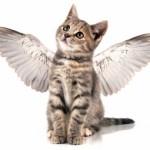 ◆天使の戯言(てんしのざれごと) No.105
