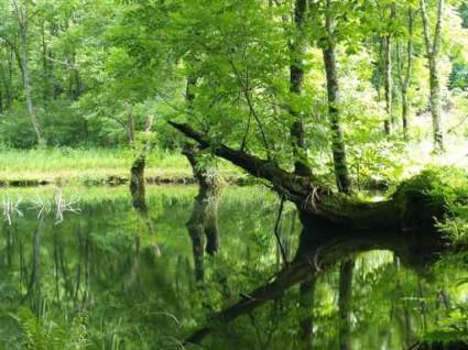 森の中の池