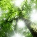 スピリチュアルと瞑想のススメ NO.4