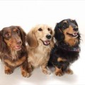 犬用ディヴァイン・ケア・プログラム
