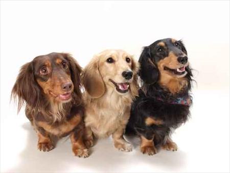 犬用ディヴァインケアプログラム