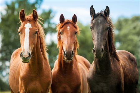 馬用ディヴァインケアプログラム